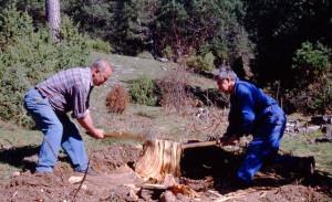 Cortando el tronco