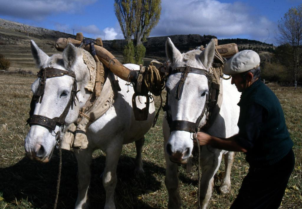 Yugo para caballería