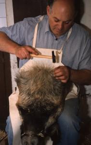 El taxidermista terminando de naturalizar la cabeza de un jabalí.