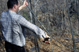 Limpiando las ramas de castaño